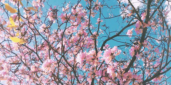 nature-idioms-abaenglish