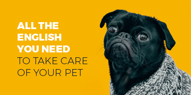 All-the-English-you-need-to-take-care-of-your-pet-abaenglish