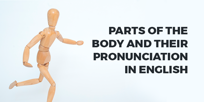 Parts-of-the-body-and-their-pronunciation-in-English-abaenglish