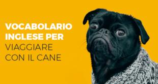 Vocabolario-inglese-per-viaggiare-con-il-cane-abaenglish