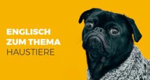 Englisch-zum-Thema-Haustiere-abaenglish